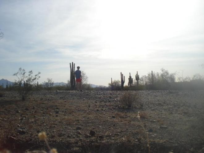 Phx_Desert_Cactus_Eoin
