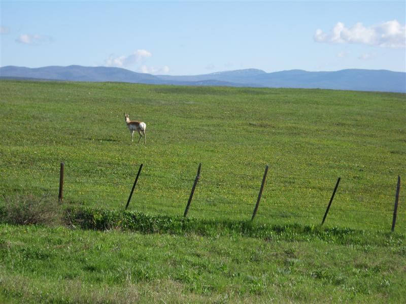 wisdom_mt_pronghorn