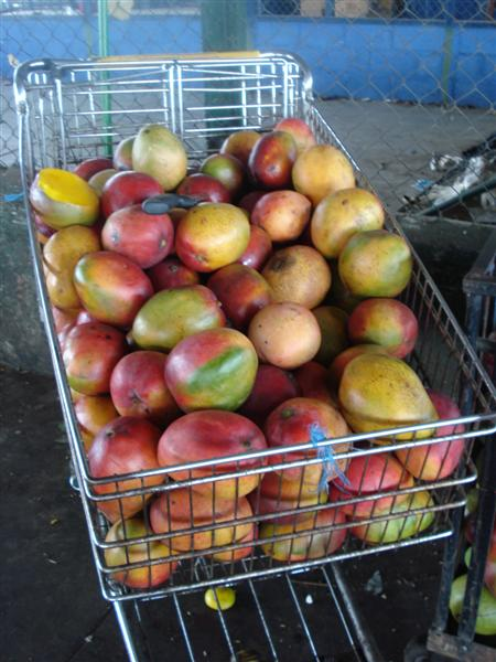 Guate_Mkt_Mangoes