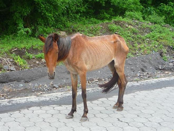 Nica_Skinny_Horse